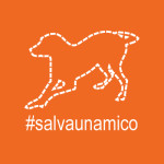 salvaunamico_400x400_arancio
